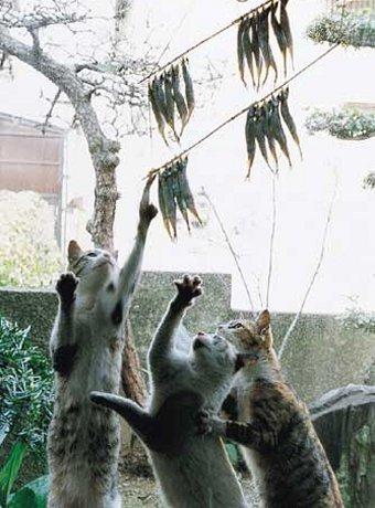 http://www.pustoty.net/jelayu_tebe_drug/cat04000.jpg