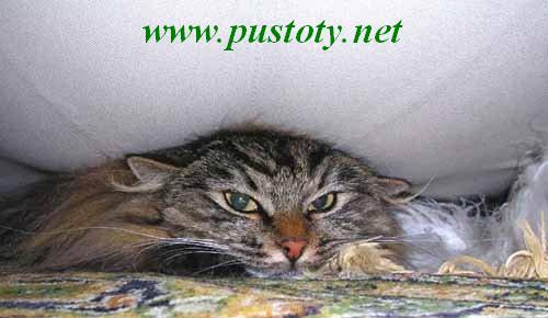 http://www.pustoty.net/jelayu_tebe_drug/cat11000.jpg