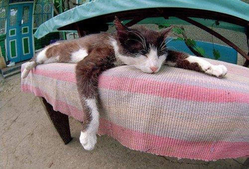 http://www.pustoty.net/jelayu_tebe_drug/cat12000.jpg