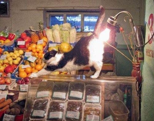 http://www.pustoty.net/jelayu_tebe_drug/cat15000.jpg